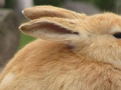 Weeding out the truth: No substance to DEA's claims of pot-crazed bunnies