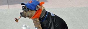 The Dog Data of New York