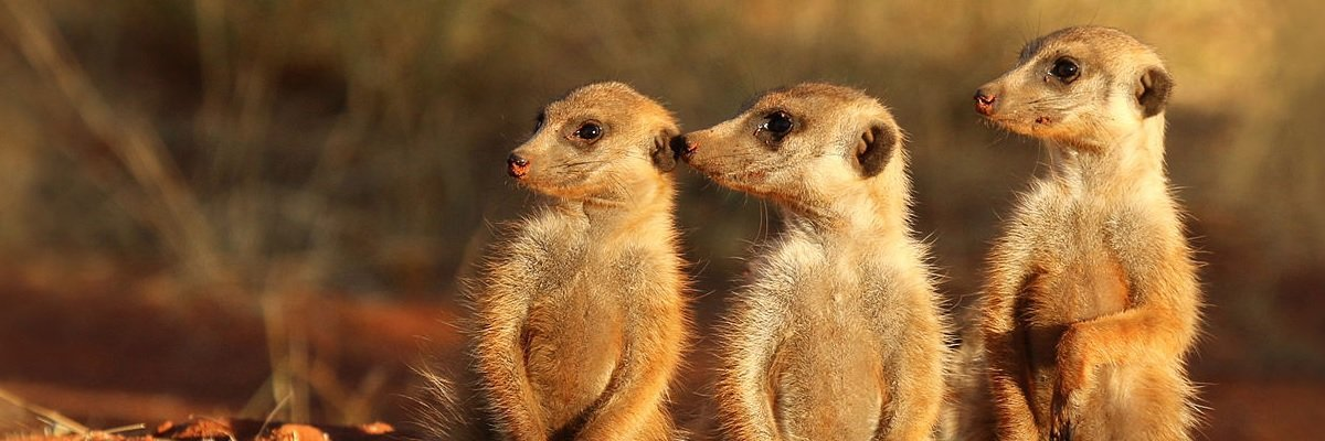 Parents refusal to get vaccine forced the Minnesota zoo to put down their meerkats