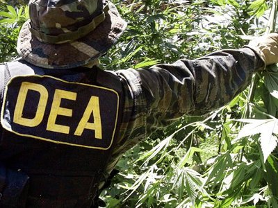DEA claims no guidelines on enforcing federal marijuana ban