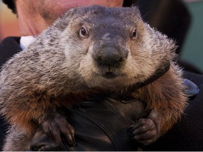Did the mayor of New York assassinate a groundhog, and other shocking revelations from the #Groundhoghazi emails