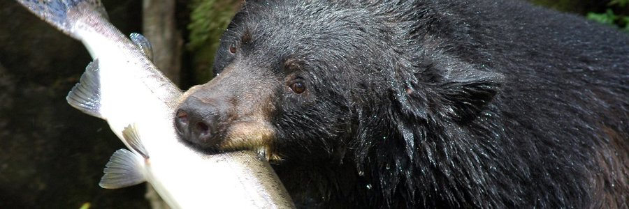 Cooking with FOIA: New Jersey's Black Bear Recipe Guide