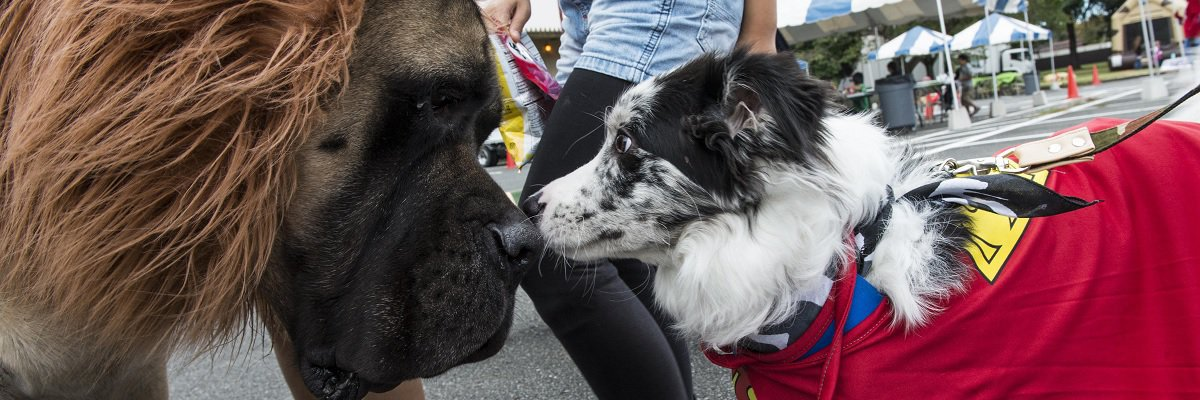 Help track down America's favorite dog names and breeds