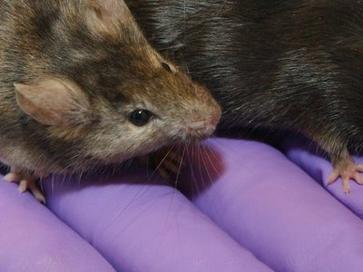 New bill in California aims to tighten up animal research reporting at the state level