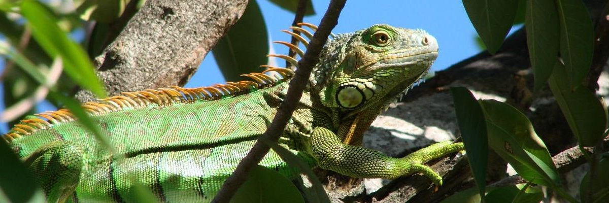 This week's FOIA roundup: Millions for Cali DMV from personal info sales, DHS is disappearing FOIA requests, and $75,000 for e-mails on iguana killing