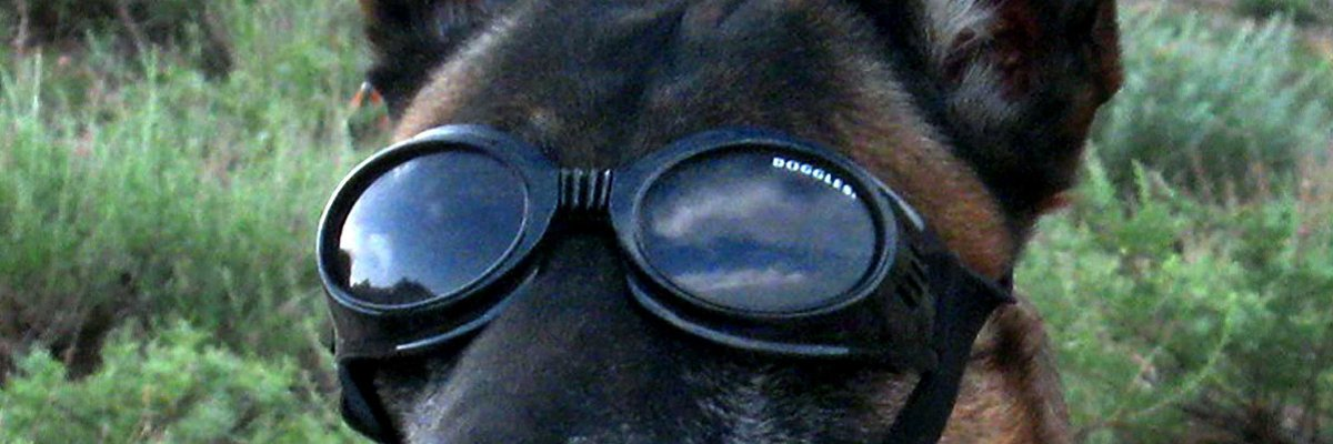 How a study on dog ESP led to the development of the military's psychic soldier program